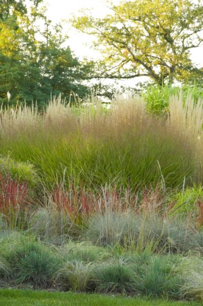 Planter des graminées ou herbes ornementales | Gamm vert
