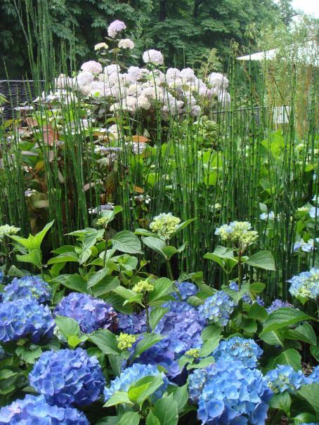 Planter les hortensias et hydrangea gamm vert - Quand planter des hortensias ...