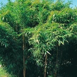 bambou le magazine gamm vert. Black Bedroom Furniture Sets. Home Design Ideas