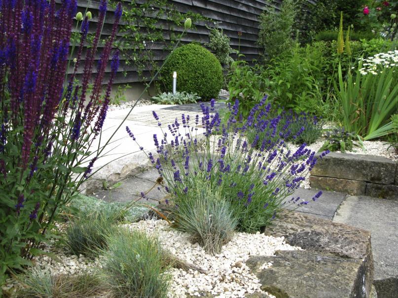 plante plein sud affordable quelles plantes choisir pour. Black Bedroom Furniture Sets. Home Design Ideas
