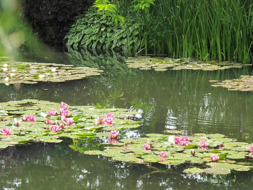 Les jardins de la fondation claude monet gamm vert - Les jardins de claude monet ...