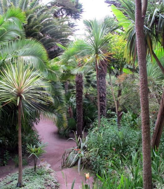 palmier quelle terre