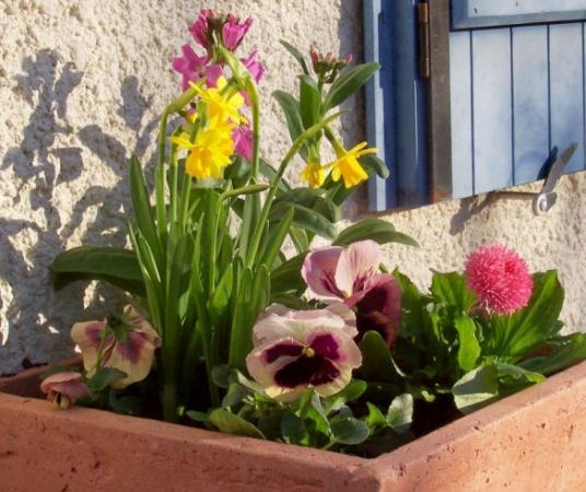 bulbes de printemps pour terrasse et balcon gamm vert. Black Bedroom Furniture Sets. Home Design Ideas