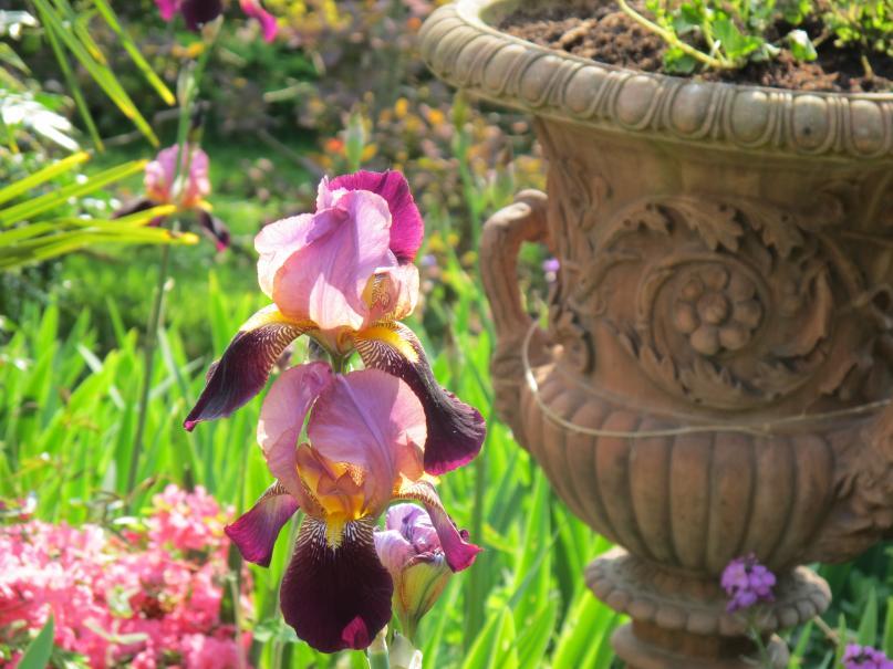 choisir des fleurs pour son jardin