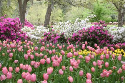 Que faire au jardin d\'ornement en avril ? | Gamm vert