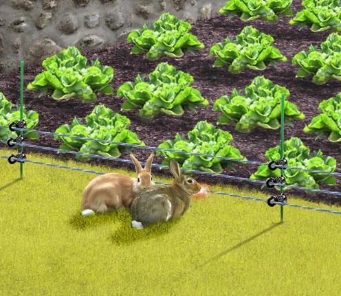 Choisir sa cl ture lectrique pour animaux chien chevaux le magazine gamm vert - Cloture chien jardin ...