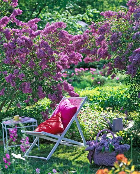 Lilas plante d 39 ext rieur gamm vert - Au jardin de mon pere les lilas sont fleuris ...