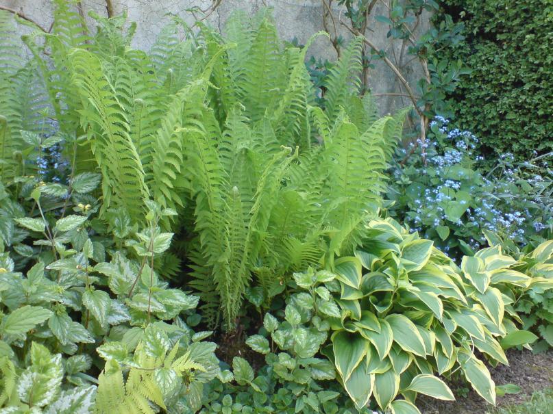 Composez un jardin à l\'ombre   Gamm vert
