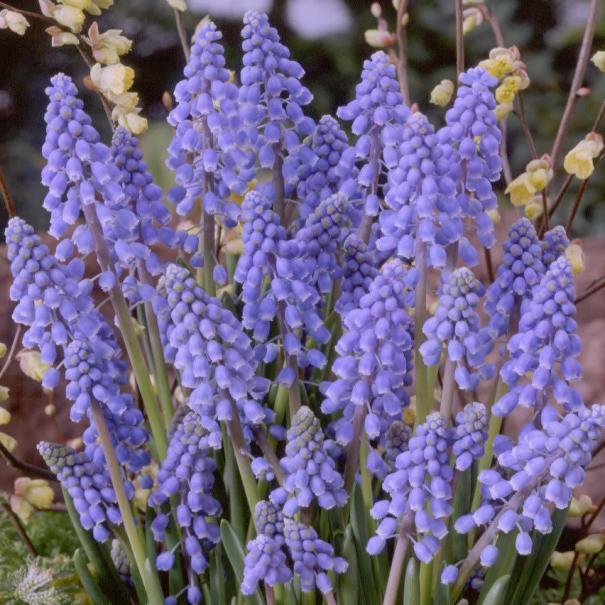 Que faire au jardin d 39 ornement en mars gamm vert - Que faire au jardin en mars ...