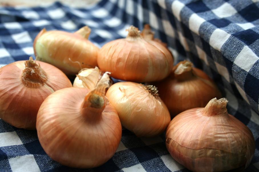 Planter les oignons le magazine gamm vert - Comment planter les oignons ...