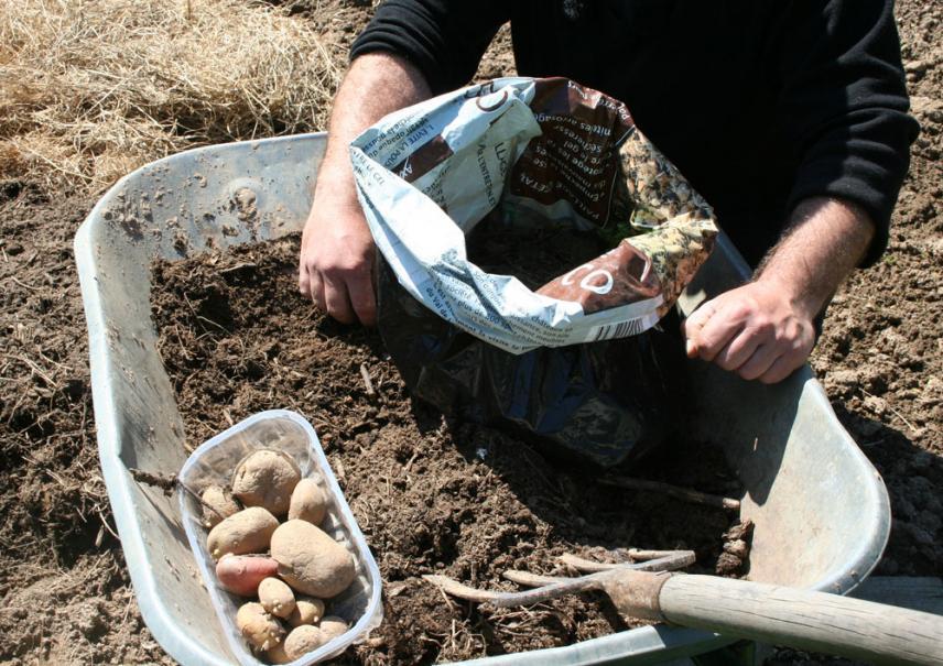 Planter Les Pommes De Terre En Sac Gamm Vert
