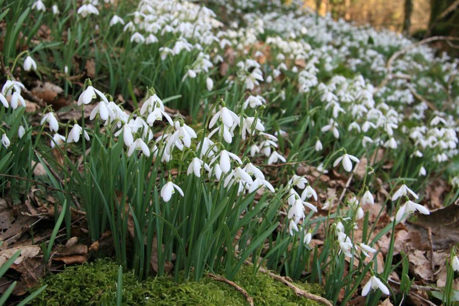 Que faire au jardin d 39 ornement en f vrier gamm vert - Que faire au jardin en fevrier ...