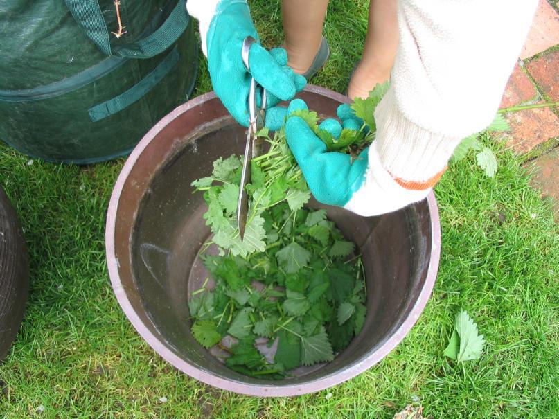 Purin d 39 ortie fabriquez votre propre engrais le - Purin d ortie fabrication ...