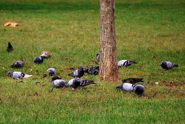 Faites fuir les oiseaux trop gourmands le magazine gamm vert - Faire fuir les pigeons ...