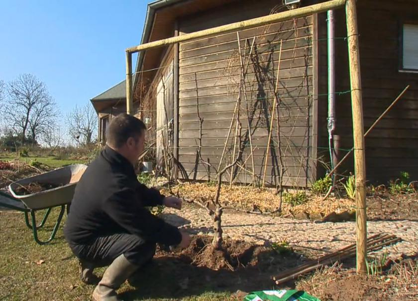 Planter un arbre fruitier paliss gamm vert - Quand planter un arbre fruitier ...