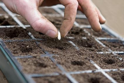 Que faire dans la serre en f vrier gamm vert - Que semer en septembre ...