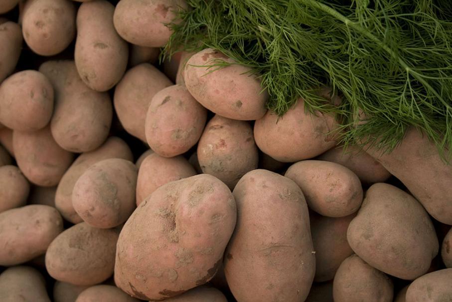 e09afc033f2 La reine du potager. La pomme de terre ...