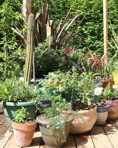 un jardin de pots orient plein sud gamm vert. Black Bedroom Furniture Sets. Home Design Ideas