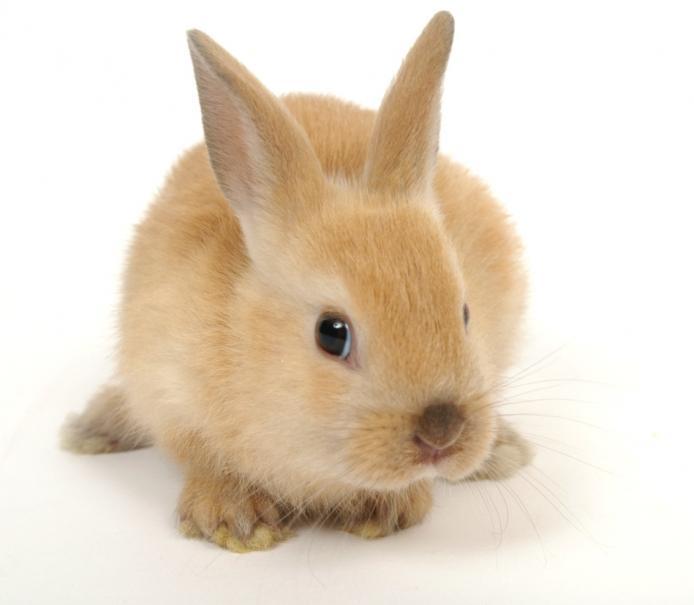 Adopter un lapin de compagnie   Gamm vert
