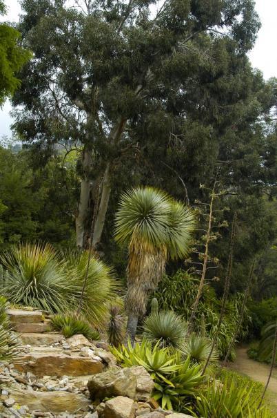 composer un jardin exotique gamm vert