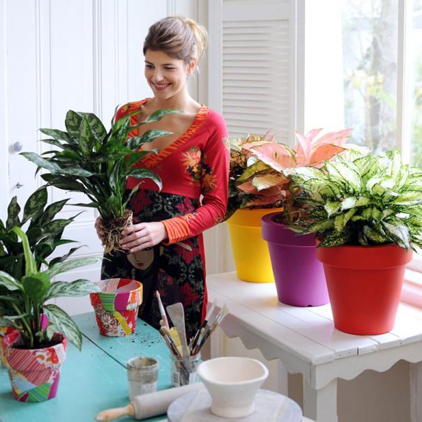 Rempoter une plante d 39 int rieur ou de balcon le magazine for Ou acheter plante interieur