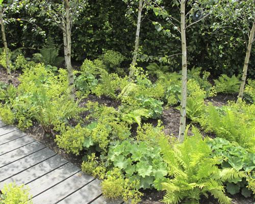 Un sous bois lumineux pour un petit jardin le magazine gamm vert - Petit jardin fruitier aulnay sous bois ...