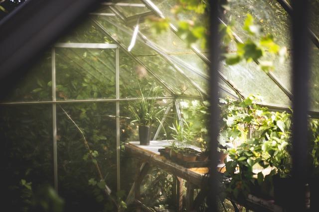 6 bonnes raisons d 39 avoir une serre dans son jardin gamm vert for Avoir une poule dans son jardin