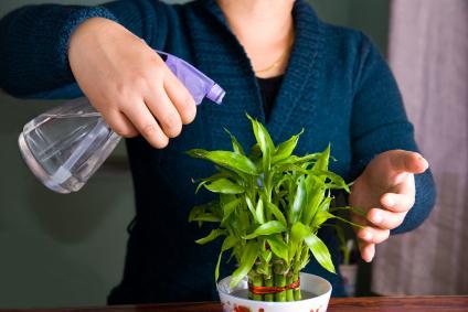 Plante Porte Bonheur offrez une plante porte-bonheur | gamm vert
