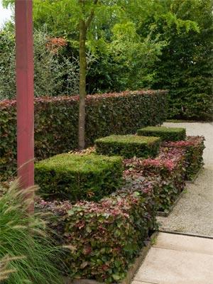 Un jardin formel contemporain gamm vert for Conseil plantation jardin
