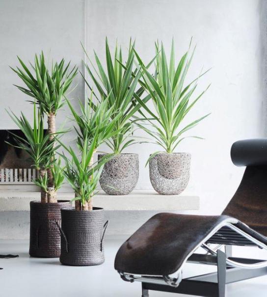 Les plantes toxiques du jardin et de la maison le for Les plantes de maison