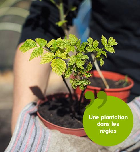 Je veux des arbres fruitiers gamm vert - Quand planter un arbre fruitier ...