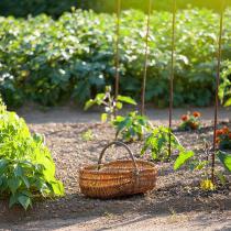 Conseils jardinage fleurs potager arbres gamm vert - Que planter en mars au potager ...