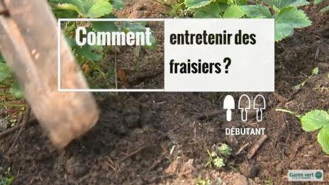 Vid o jardinage potager verger gamm vert - Comment reconnaitre physalis comestible ...