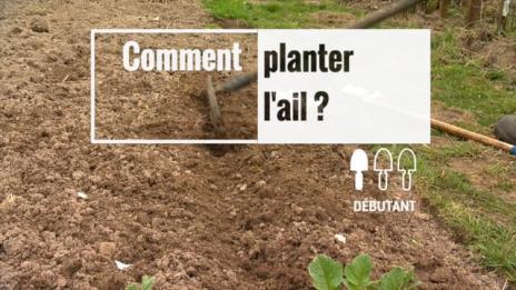 Planter l'ail | Gamm vert