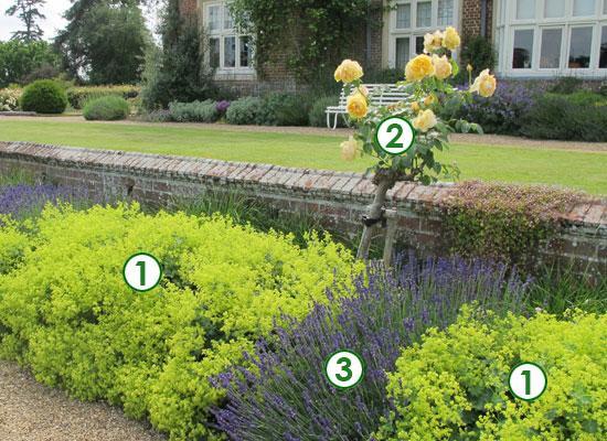 Une bordure l 39 anglaise sc nes de jardins for Plantes de bordures