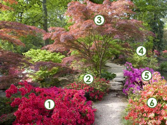 Quel arbuste pour un jardin zen - Jardin zen exterieur ...
