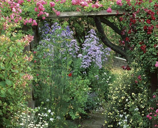Une Pergola Et Des Plantes Grimpantes Sc Nes De Jardins