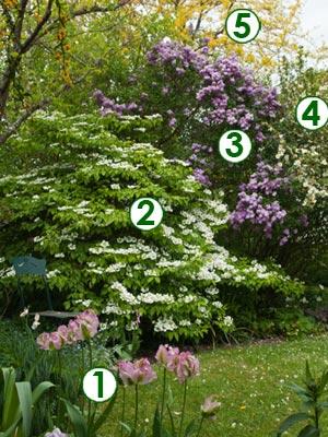 Splendeur printani re l 39 anglaise sc nes de jardins - Jardins a l anglaise ...