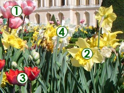 Bordure de bulbes ensoleill e au printemps sc nes de jardins - Bulbes a planter au printemps ...